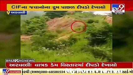 View Full Screen: leopard spotted in aravalli39s vatrak dam area tv9news.jpg