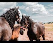 Secret Animals - Equestrian Professional Academy