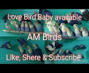 AM Birds